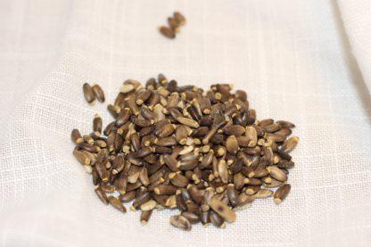 Samen der Mariendistel für unser Futteröl für Pferde