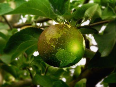 Nachhaltige Landwirtschaft und Umweltschutz