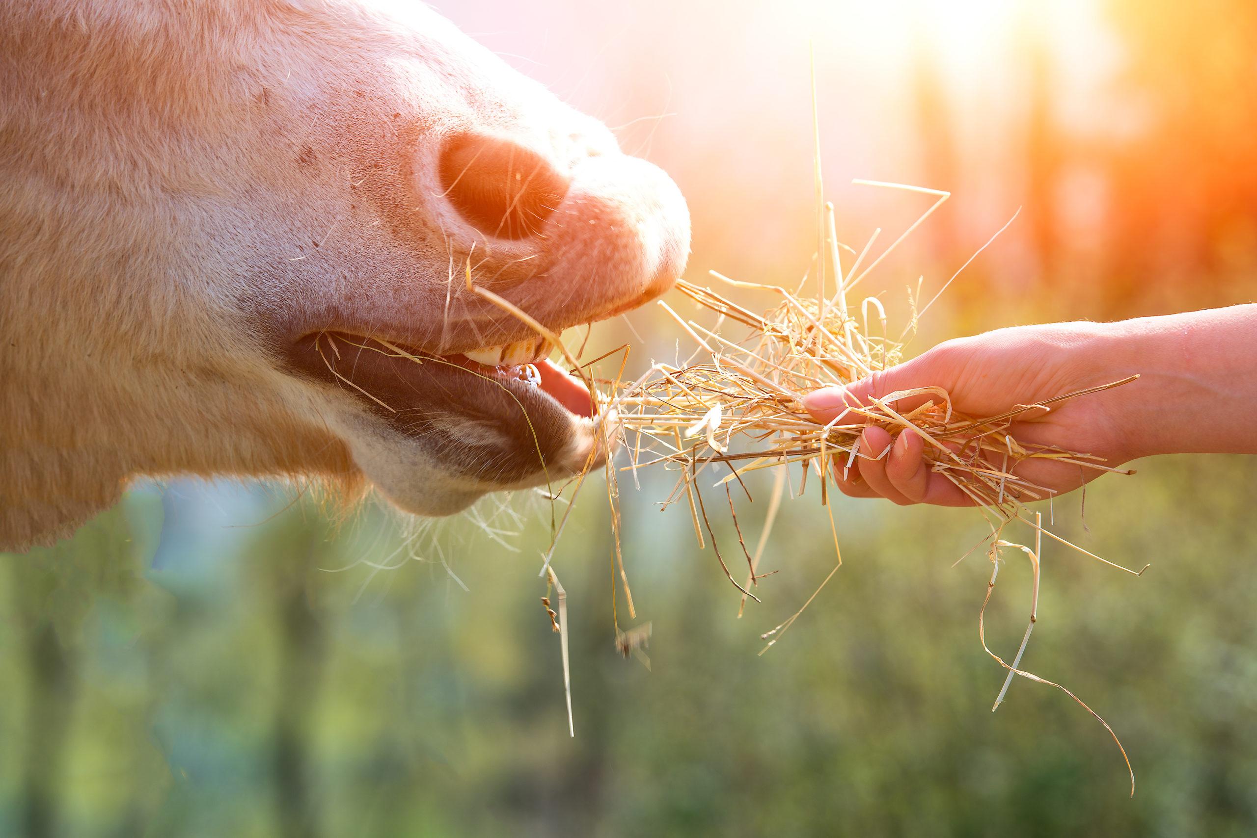 Was passiert, wenn Pferde fressen?