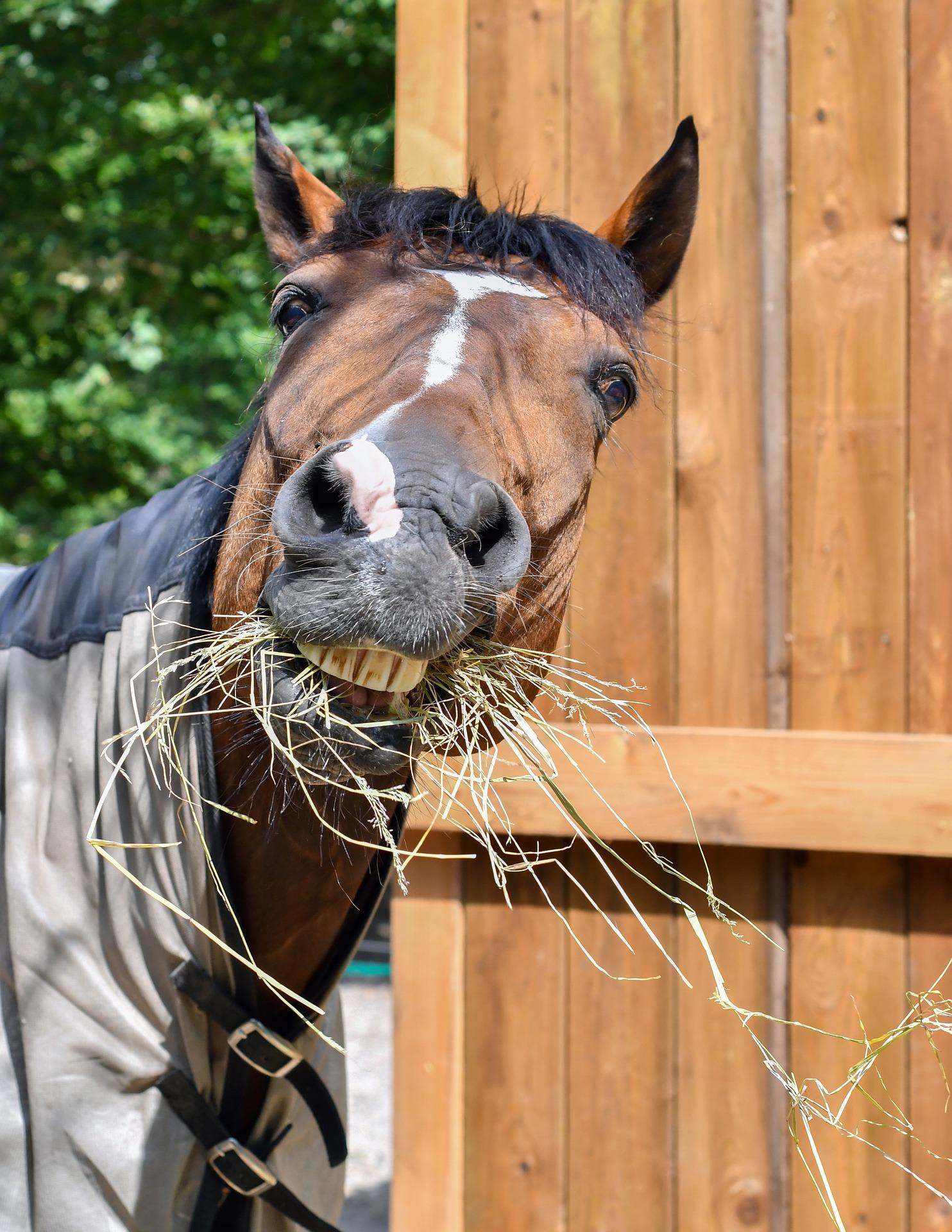 Verdauungstrakt-pferd-malou-futter