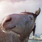 Malou_athritis_post_happy_horse-150x150 Allgemeine Information