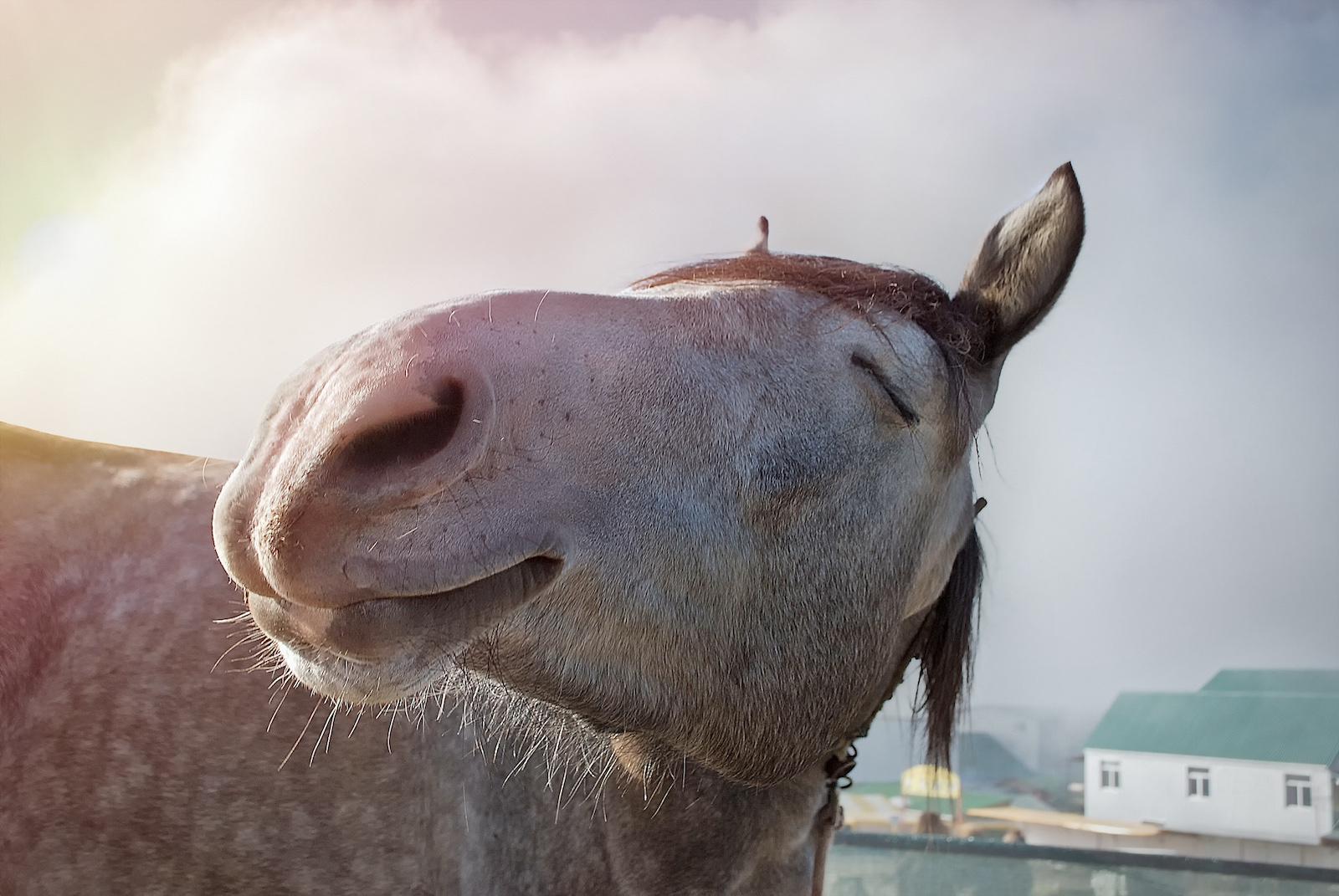 Malou_athritis_post_happy_horse