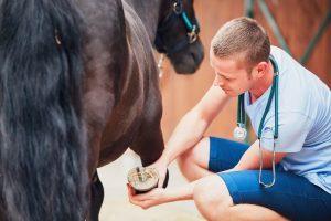 Malou_athritis_post_vet_checking_horse-300x200 Auch bei Arthrose kann man eine ganze Menge tun